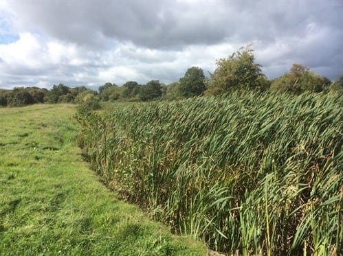 R17092 New Lease Of Life For Ancient Abbey Ponds 2