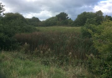 R17092 New Lease Of Life For Ancient Abbey Ponds 1